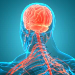 Brain Awareness and injury
